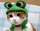 catwithhat.png